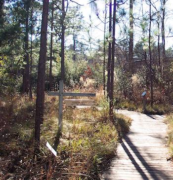 At North Carolina Botanical Garden you can—